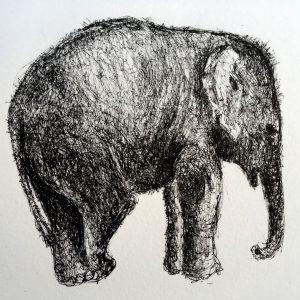 Relaxed elephant, litho, Harriet Brigdale, Artist
