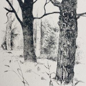 Dark tree, litho, Harriet Brigdale, Artist