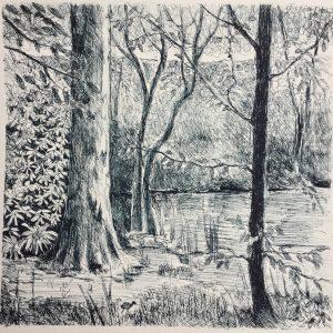 Lake in Wakehurst place, litho, Harriet Brigdale, Artist