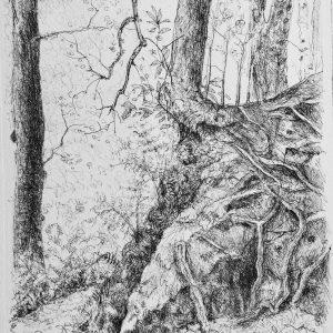 Leaning tree and rocks, Harriet Brigdale, Artist